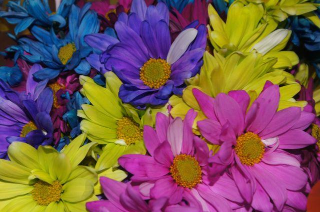 Flowergift_quniceanos